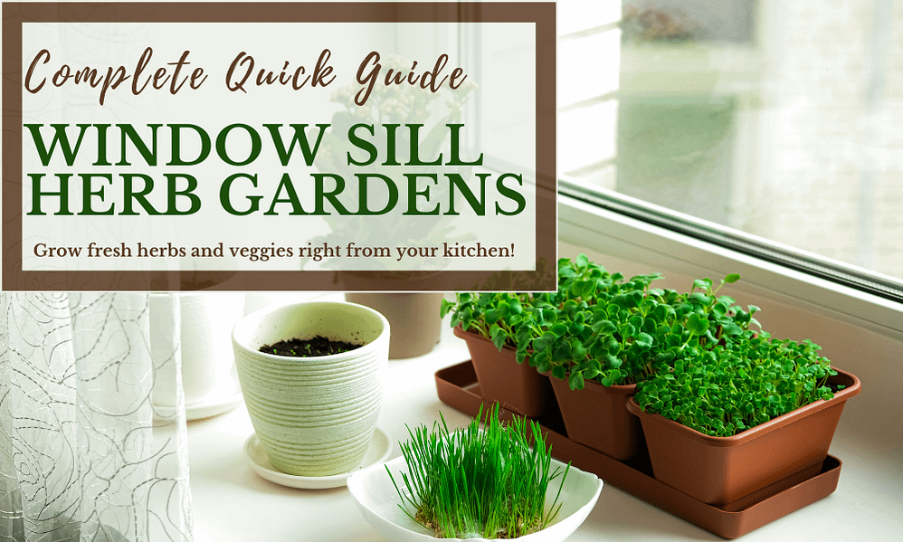 Windowsill Herb Garden Quick Guide: The Only Info You Need